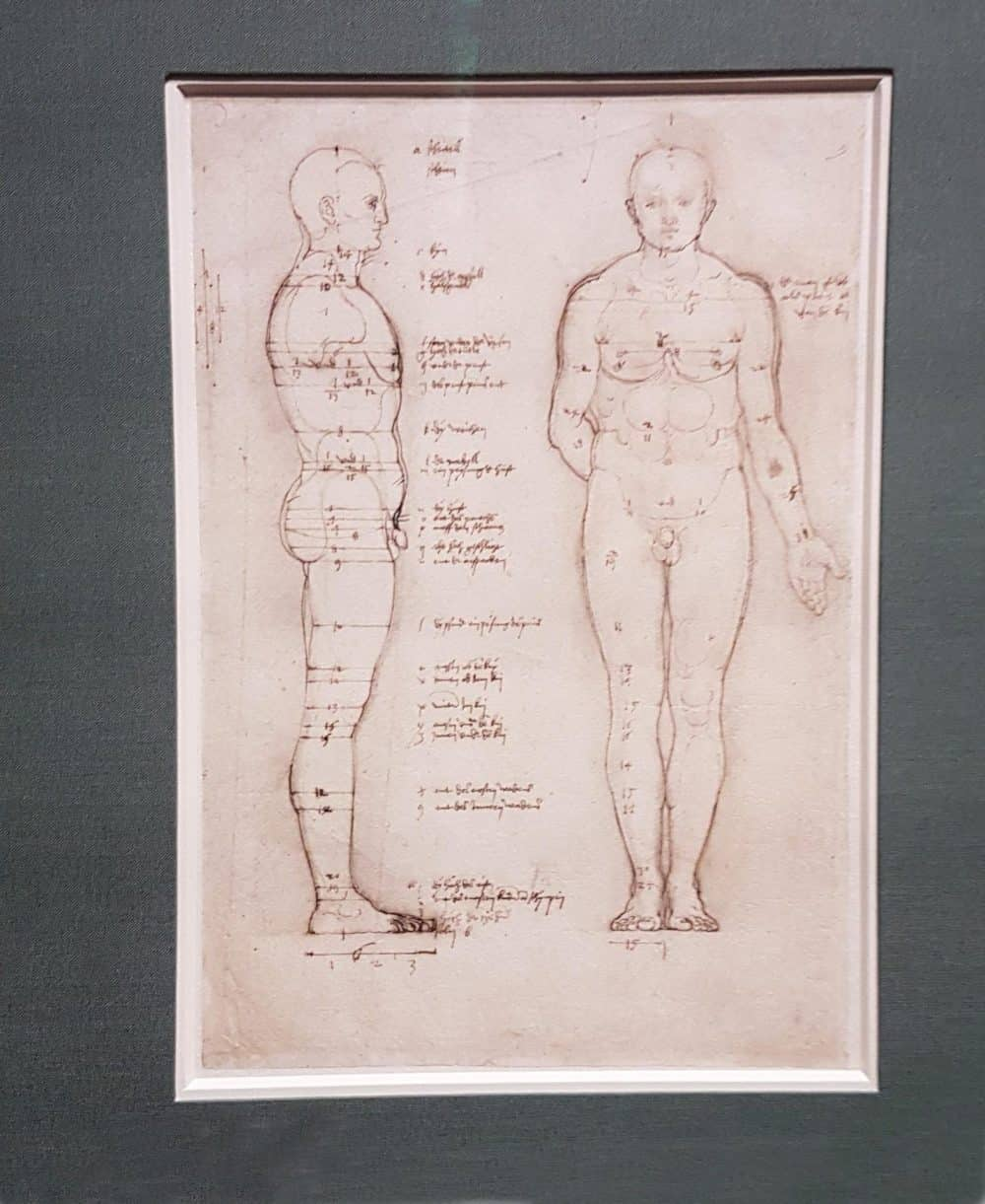 "Albrecht Dürer ""Study in human proportion: Male Body. Side and Front View (ca. 1513). Photo: Art with me! e.U., 2019"