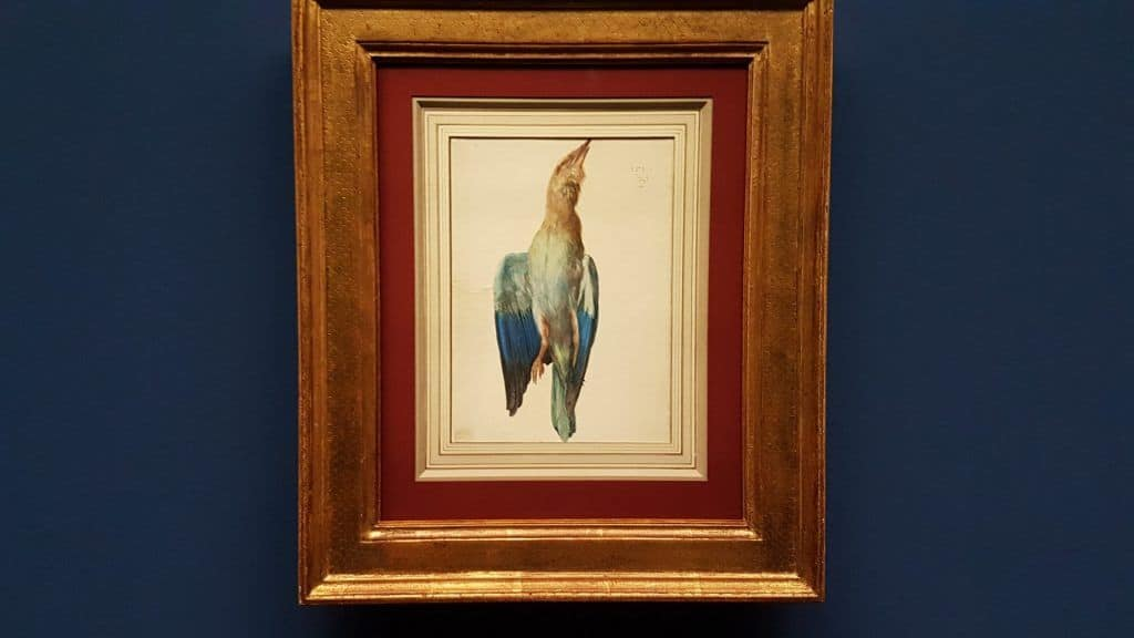 "Albrecht Dürer ""A Blue Roller"" (c. 1500) in the exhibition in Albertina. Photo: Art with me! e.U., 2019"