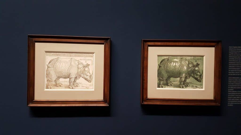 "Albrecht Dürer's drawing of ""Rhinoceros"" and the drawing engraving at the Albertina exhibition in Vienna. Photo: Art with me! e.U., 2019"