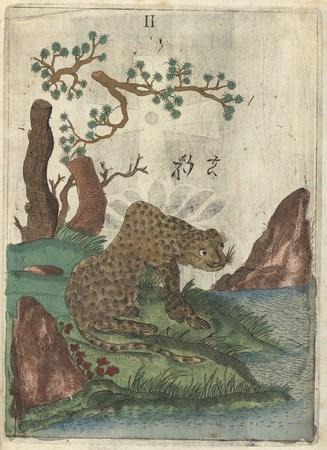 """Леопард"" из Michael Boym, Flora Sinensis, Вена, 1656 © Österreichische Nationalbibliothek, 2009"